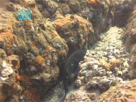 Underwater life of Kokan
