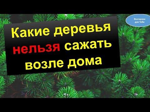 Какие деревья нельзя сажать рядом с домом @Эзотерика для Тебя: Гороскопы. Ритуалы. Советы.