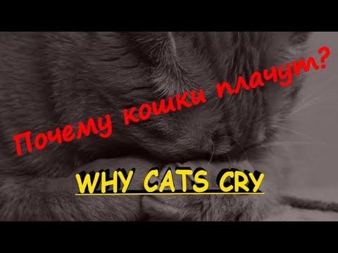 Вопрос: Почему у кошек такая форма глаз и с чем это связано?