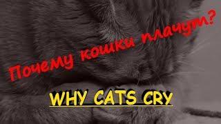 ПОЧЕМУ КОШКИ ПЛАЧУТ  WHY CATS CRY