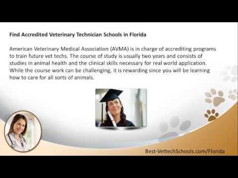 Top Veterinary Technician Schools In Florida Fl Vet Tech Programs