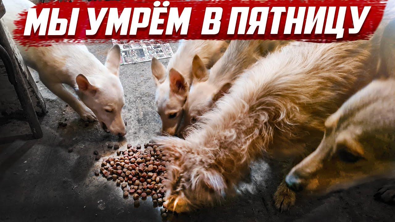 В пятницу собак усыпят... | Бугуруслан