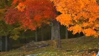 Mùa thu chết - Bằng Kiều