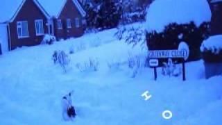 Snow Shipston-on-stour 2010 Our Springer Spaniel