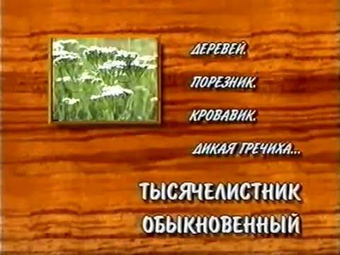 Золотой корень - описание, рецепты, применение
