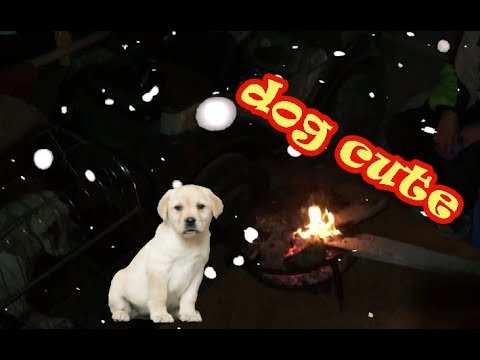 cute dog - winter heating with dogs - Pet vlog