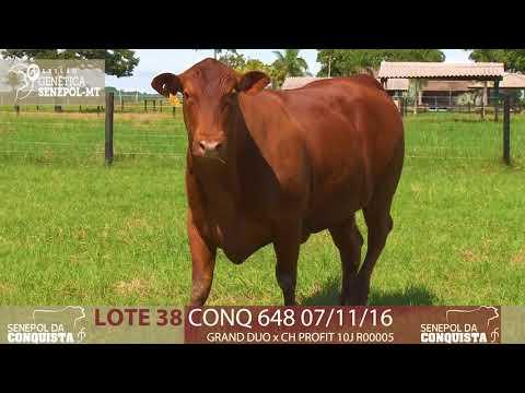 LOTE 38 CONQ 648