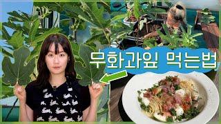무화과 잎사귀의 맛 (무화과 오일, 무화과잎으로 감싼 …