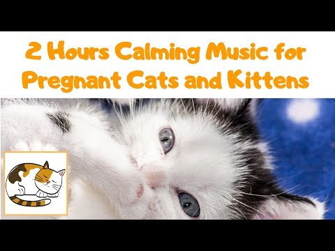 2 Hours Calming Music for Pregnant Cats and Kittens