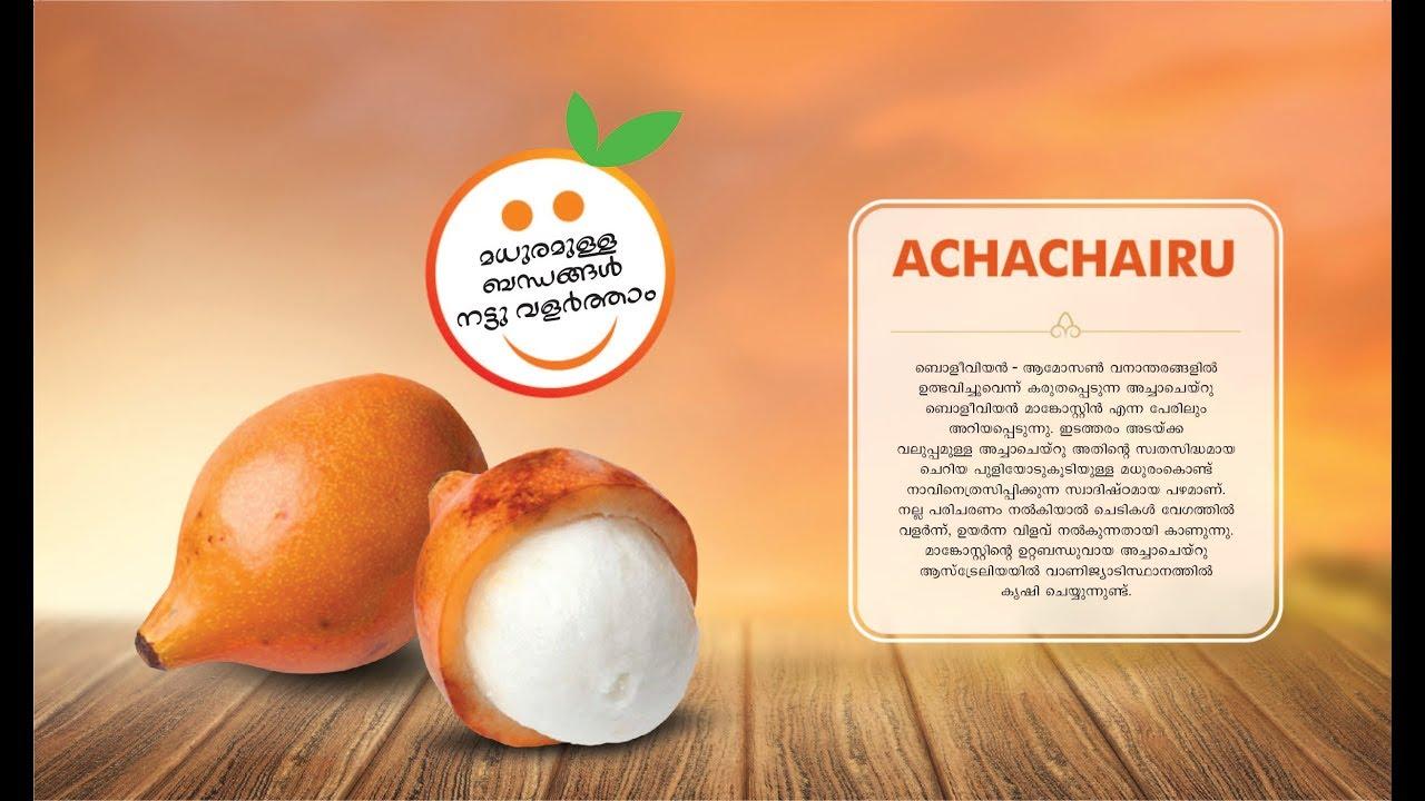 Achachairu | അച്ചാചെയറു