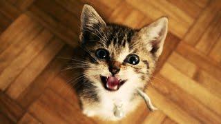 Sjove Katte Og Killinger Meowing. Kompilering 2015 [Ny Hd]