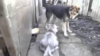 Злая кошка не любит собак!  Angry Cat
