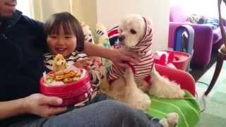 アメリカンコッカースパニエルのエマの4歳の誕生日ケーキ insatagram ht...