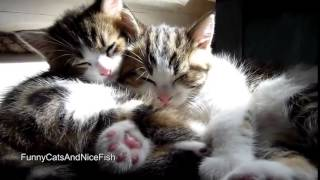 Милые котята  Прикольное видео с котами  Эти смешные кошки  Кошки спят