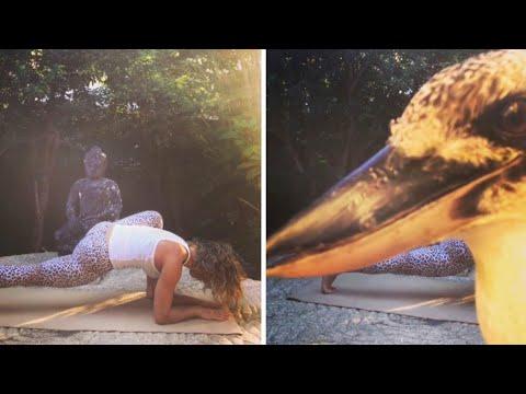Cheeky Kookaburra Photobombs Yoga Instructor