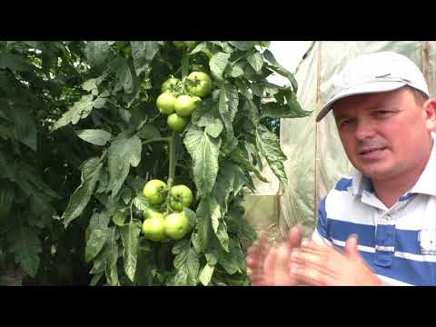 Формировка томатов- что