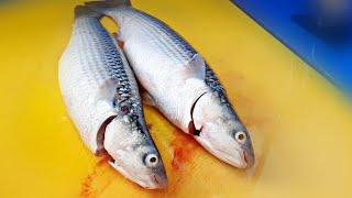 Fish trim , mullet , flathead mullet , sashimi