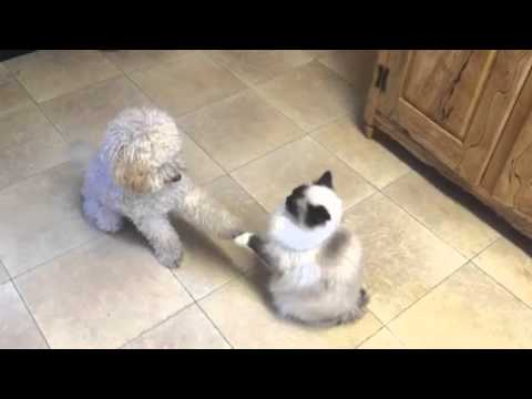 Playful puppy cat attack