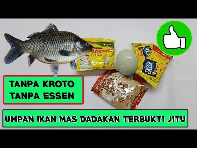 Umpan Ikan Mas Dadakan Tanpa Kroto Tanpa Essen Paling Jitu Youtube