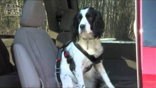 Pet Travel Safety: Pet Buckle Seatbelt Harness & Kwik Connect Tether | Drsfostersmith.com