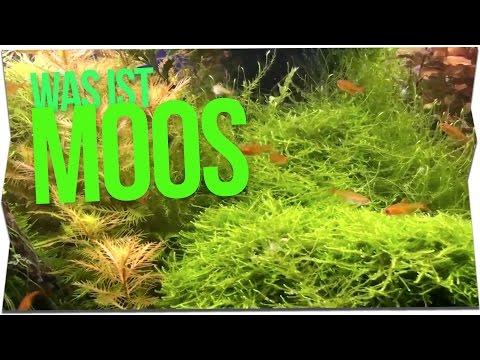 WAS IST MOOS? | Portrait | GarnelenTv