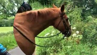 Short Relaxing Trail Ride Through Village In Yorkshire, England