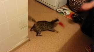 Игра бенгальской кошки 3 месяца