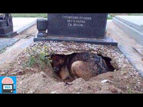 Alle glaubten, dass dieser Hund um seinen Besitzer trauern würde, doch sie lagen falsch!