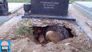 Alle glaubten, dass dieser Hund um seinen Besitzer trauern würde, doch sie lagen falsch! thumbnail