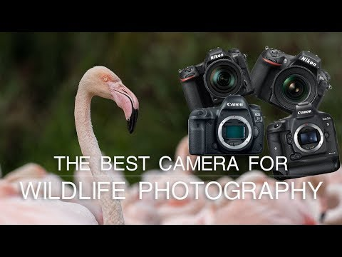 What is the Best Camera for Wildlife Photography? | Wildlife