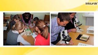 Организация исследовательской деятельности школьников | Видеолекции | Инфоурок