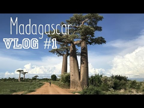 Madagascar: Snake near hotel! Baobab avenue and purple sunsets