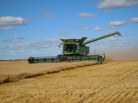 Как комбайн собирает пшеницу