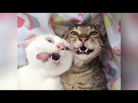 EXPERIENCE the BIGGEST LAUGH of your life - Extremely FUNNY ANIMAL videos