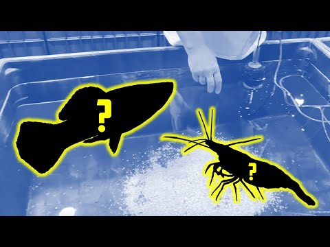 NEW FISH & SHRIMP For Mini Indoor Ponds [Fish Room Vlog]