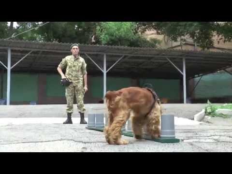 Собачья служба на границе