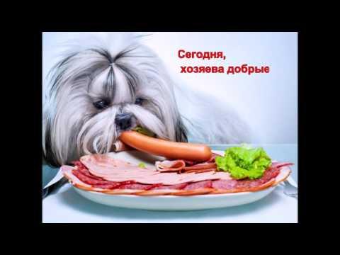 Фото прикольных Щенков Собак (72 фото) - Приколы www
