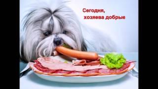 Самые смешные и прикольные фото видео про собаки