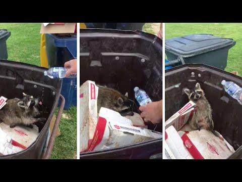 Raccoon Leaps From Bin To Bin In Escape Fail