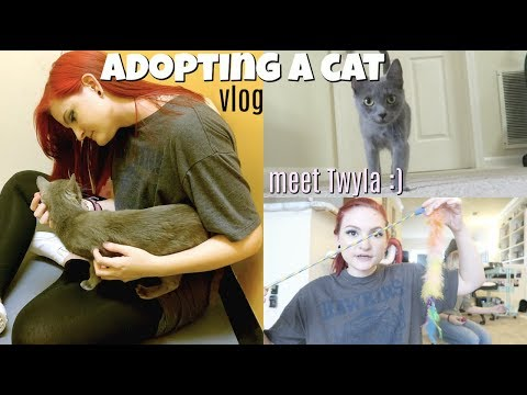 I ADOPTED A CAT! + CAT HAUL🐱| VLOG |