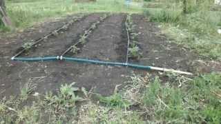 Капельный полив своими руками для небольшого участка.(Существует большое количество способов полива растений. Один из самых эффективных, это капельный полив...., 2013-05-20T12:50:20.000Z)