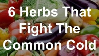 6 herbs that fight the common cold