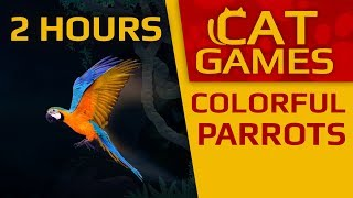 CAT GAMES - Colorful Parrots! 2 HOURS (VIDEOS FOR CATS TO WATCH) 4K 60FPS