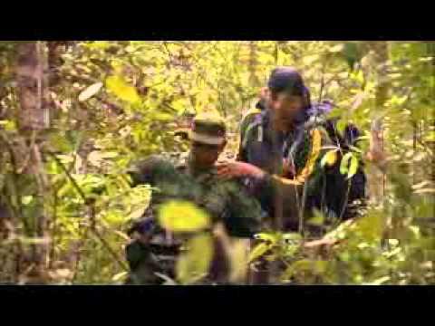 Sumatran Tiger Part 1