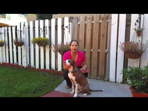 Fort Lauderdale Dog Training Reviews