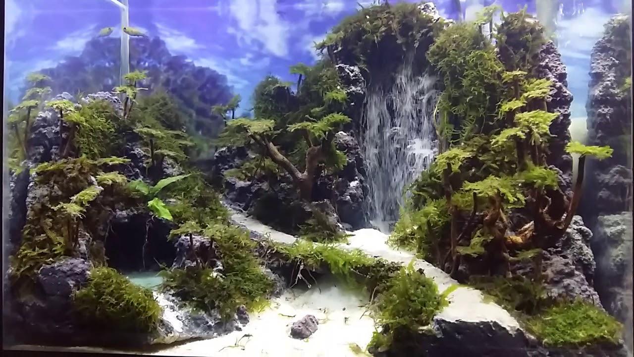 Aquascape air terjun - YouTube