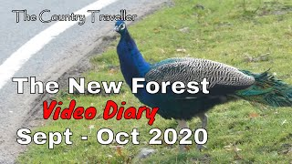 The New Forest Video Diary in September and October 2020  #leavenotrace