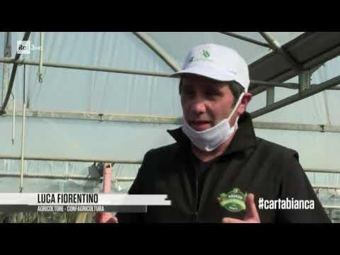 Agricoltura in crisi - #cartabianca 12/05/2020