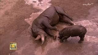 Badespaß fürs Nashornbaby | MDR