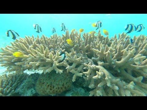 Professor Peter Harrison, Southern Cross University on new coral colonies Great Barrier Reef